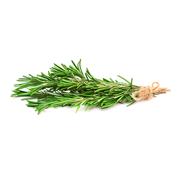 rosemary-2.png